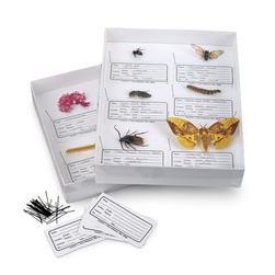 Insect Collection Box Classroom Set