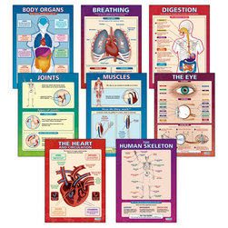 Elementary Anatomy Posters