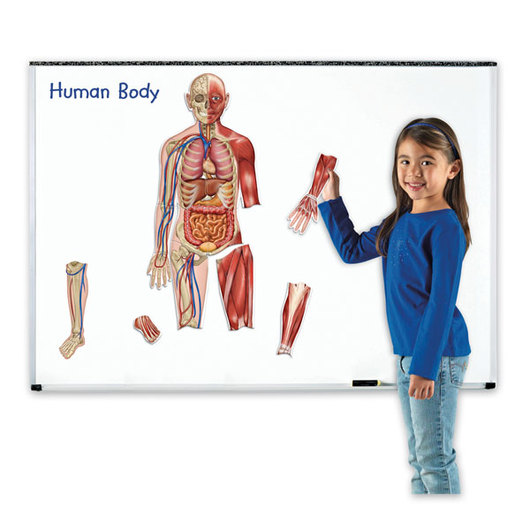 Magnetic Human Body - 17 Pieces