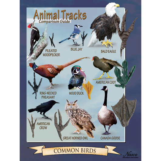 Tracks of Common Birds Poster