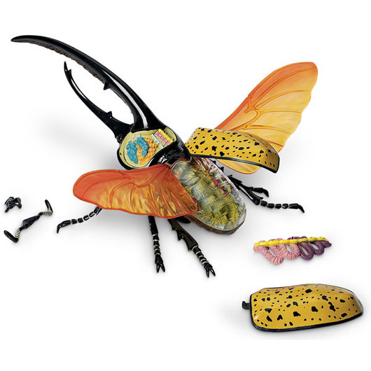 4D Vision™ Model - Hercules Beetle