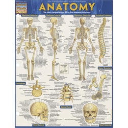 QuickStudy® Anatomy I Guide - 8-1/2 in. x 11 in.