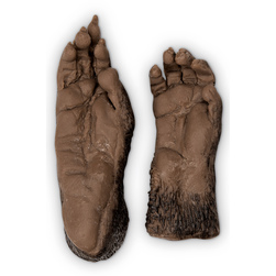 Nasco Monkey Paw (Rhesus Macaque Hand) and Foot Replica