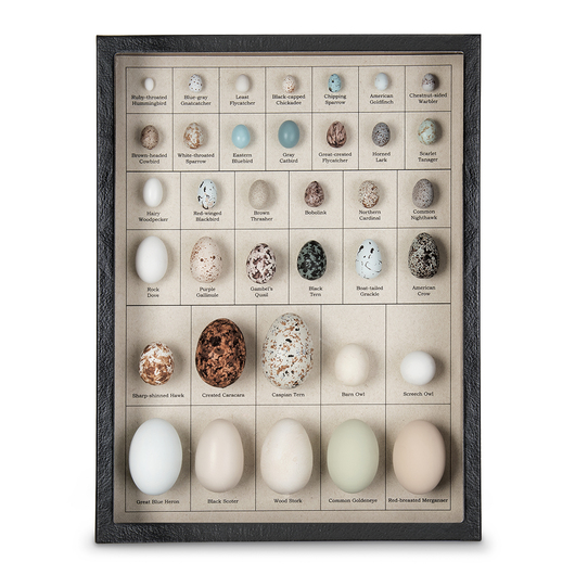 Eggs of North American Birds