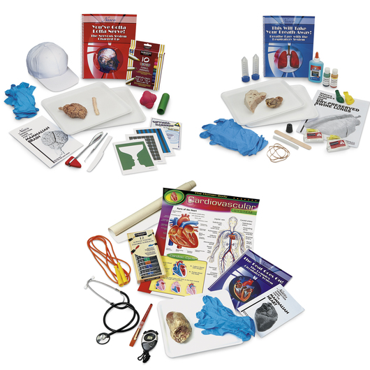 Human Body System Kits - Complete Set of 3