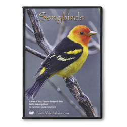Continuous Play DVDs - Songbirds