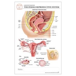 Post-It® Reproductive System Anatomical Chart