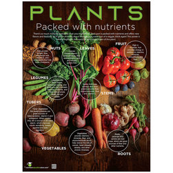 Plant Parts and Health Benefits Poster