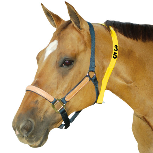 Neck Strap and Buckle - 1-3 Digit Numbered - 48 in. - Yellow