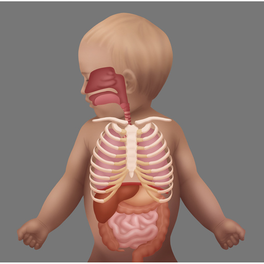 Respiratory Distress in the Pediatric Patient: Anatomy, Physiology, and Breath Sounds
