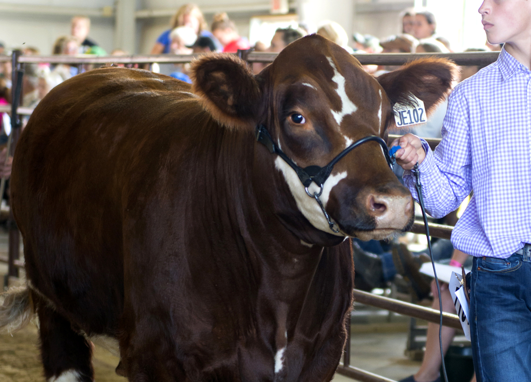 livestock-showing-grooming-featured-category-535x385.jpg