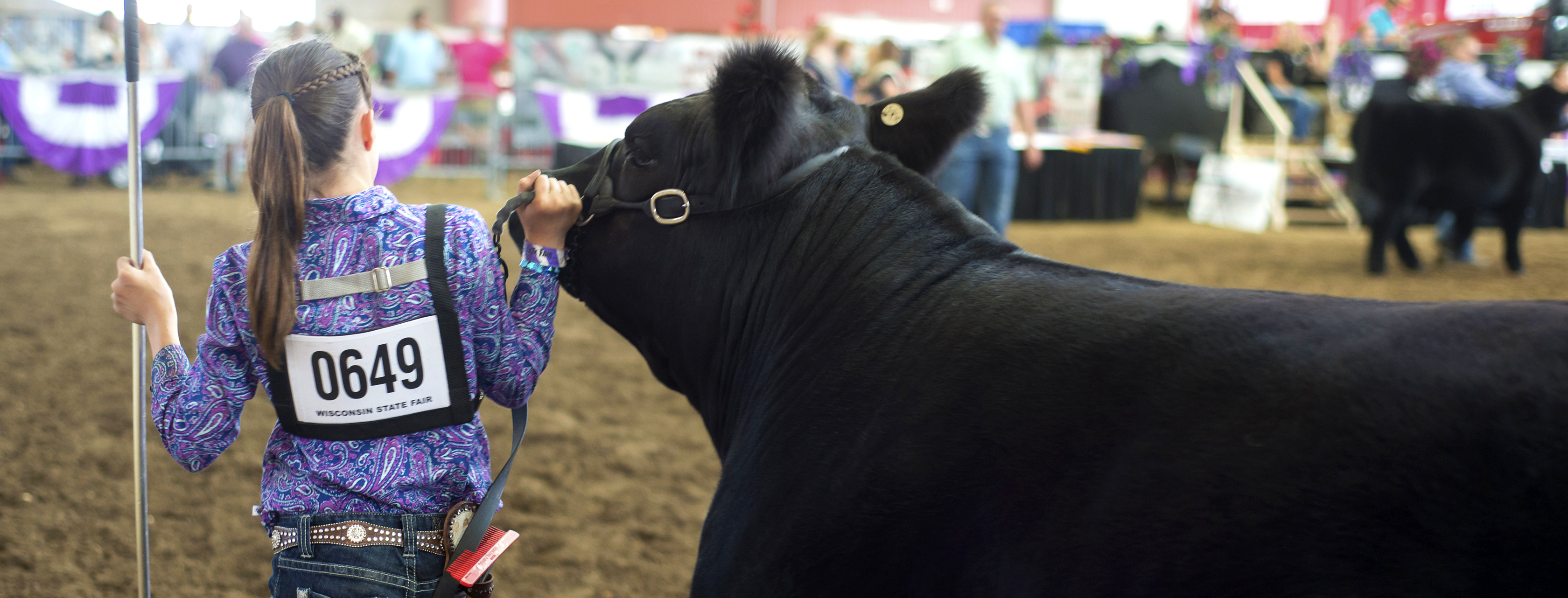 livestock-showing-grooming-hero-banner-0817-1680x641.jpg